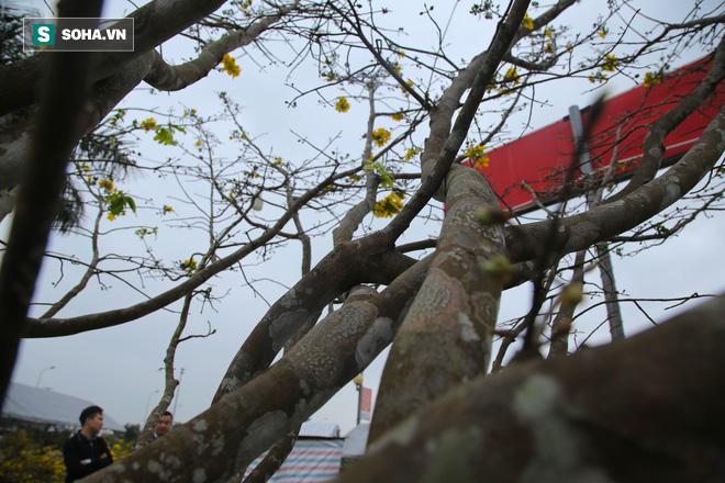Nhiều người dân kéo đến xem cặp đào, mai cổ thụ có giá gần nửa tỷ đồng - Ảnh 10.