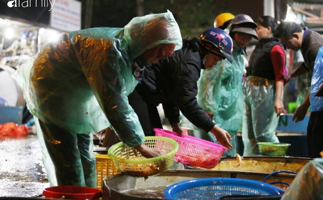 Ngày ông Công ông Táo, chợ cá lớn nhất Hà Nội cháy hàng cá chép từ rạng sáng