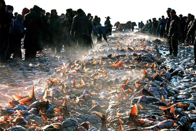 24h qua ảnh: Ngư dân Trung Quốc thu hoạch cá vào mùa đông - Ảnh 3.