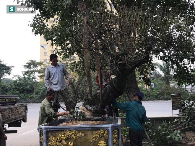Tài xế nghỉ làm đi chở thuê cây cảnh ngày cận Tết kiếm tiền triệu mỗi ngày - Ảnh 1.