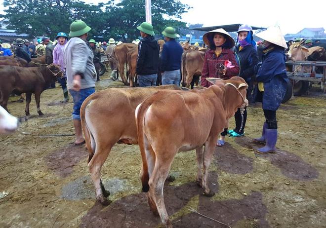 Ghé chợ trâu bò lớn nhất Đông Nam Á ngày cận Tết - Ảnh 19.