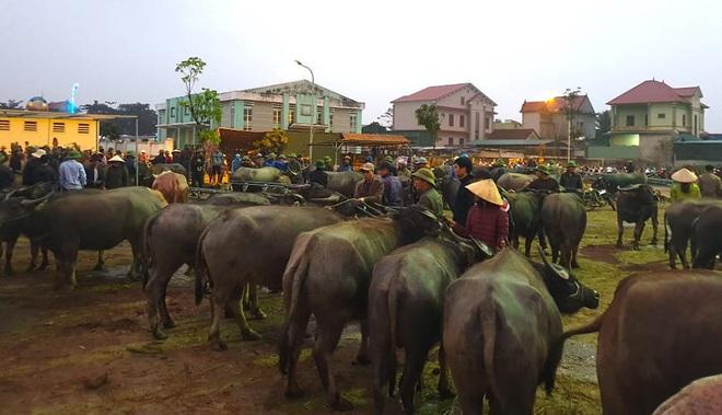 Ghé chợ trâu bò lớn nhất Đông Nam Á ngày cận Tết - Ảnh 2.