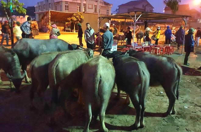 Ghé chợ trâu bò lớn nhất Đông Nam Á ngày cận Tết - Ảnh 5.