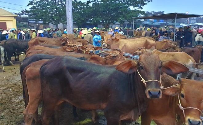 Ghé chợ trâu bò lớn nhất Đông Nam Á ngày cận Tết - Ảnh 17.