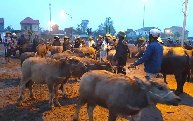 Ghé chợ trâu bò lớn nhất Đông Nam Á ngày cận Tết - Ảnh 7.