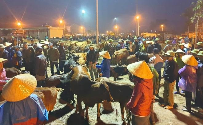 Ghé chợ trâu bò lớn nhất Đông Nam Á ngày cận Tết - Ảnh 4.