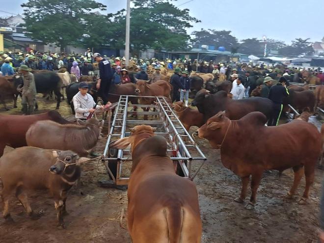 Ghé chợ trâu bò lớn nhất Đông Nam Á ngày cận Tết - Ảnh 10.