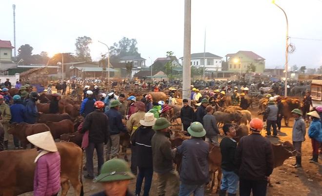 Ghé chợ trâu bò lớn nhất Đông Nam Á ngày cận Tết - Ảnh 3.