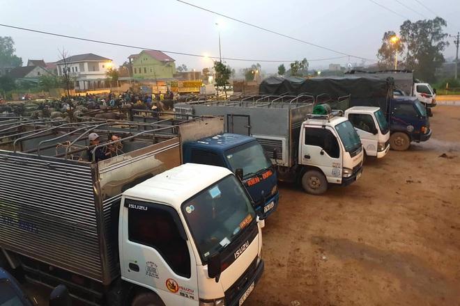 Ghé chợ trâu bò lớn nhất Đông Nam Á ngày cận Tết - Ảnh 14.