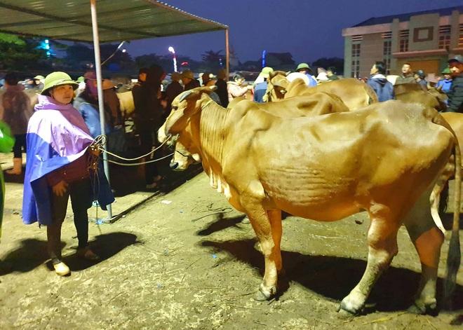 Ghé chợ trâu bò lớn nhất Đông Nam Á ngày cận Tết - Ảnh 12.