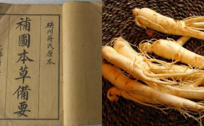 """Nhân sâm: Một loài cây người phương Tây xem như cải thảo nhưng lại là """"thần dược"""" của triều đình phong kiến Trung Quốc"""