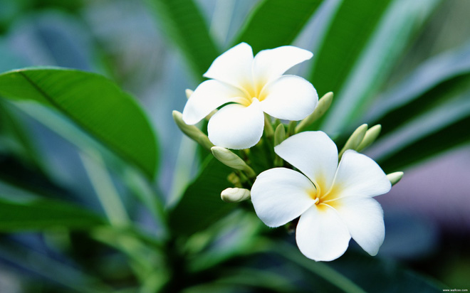 6 loài hoa tuyệt đối không bày trong nhà và trên ban thờ kẻo tán tài tán lộc - Ảnh 1.