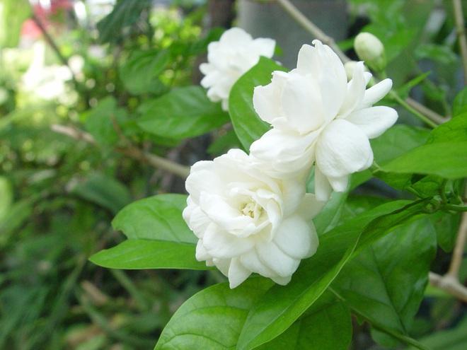 6 loài hoa tuyệt đối không bày trong nhà và trên ban thờ kẻo tán tài tán lộc - Ảnh 2.