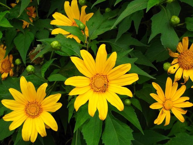 6 loài hoa tuyệt đối không bày trong nhà và trên ban thờ kẻo tán tài tán lộc - Ảnh 3.