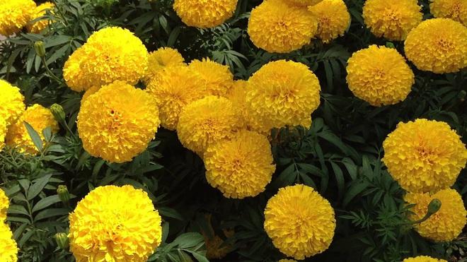 6 loài hoa tuyệt đối không bày trong nhà và trên ban thờ kẻo tán tài tán lộc - Ảnh 4.