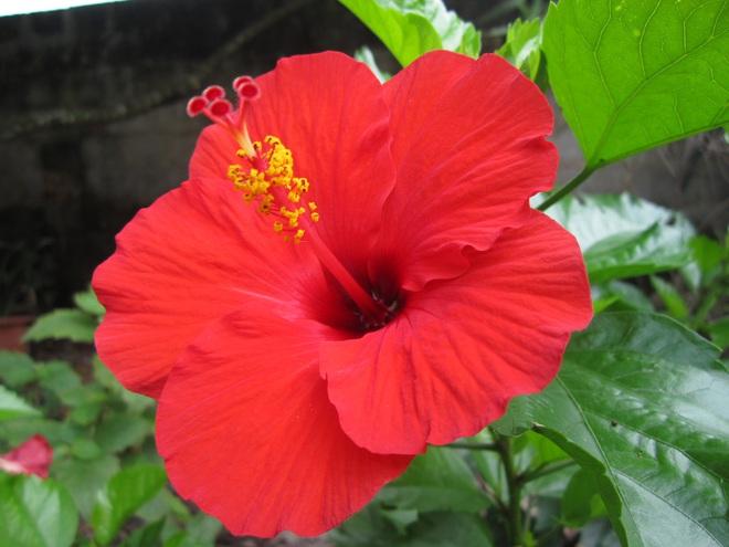 6 loài hoa tuyệt đối không bày trong nhà và trên ban thờ kẻo tán tài tán lộc - Ảnh 5.