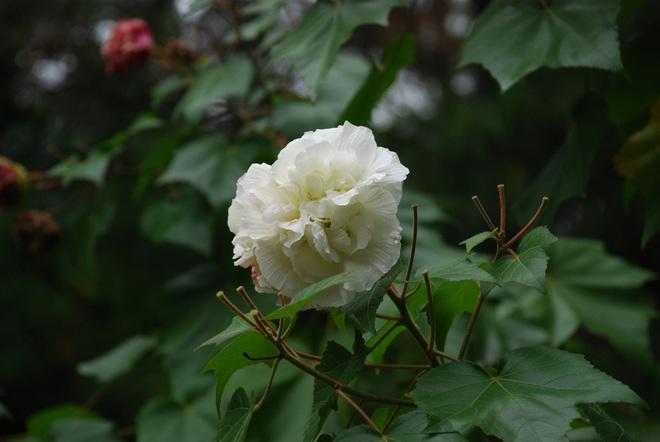 6 loài hoa tuyệt đối không bày trong nhà và trên ban thờ kẻo tán tài tán lộc - Ảnh 6.