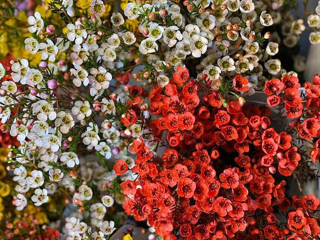 Rộ mốt chơi hoa nhập khẩu Tết 2020, 700.000 đồng/cành đào đỏ Nhật Bản vẫn đắt khách - Ảnh 3.