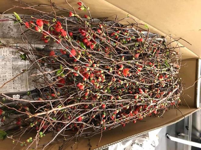 Rộ mốt chơi hoa nhập khẩu Tết 2020, 700.000 đồng/cành đào đỏ Nhật Bản vẫn đắt khách - Ảnh 1.