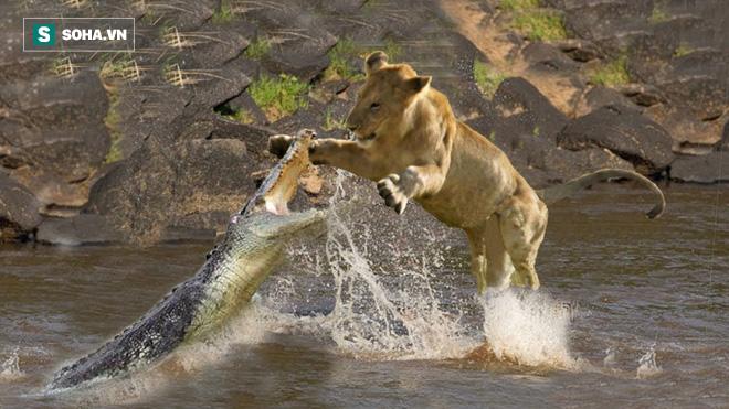 Băng qua lãnh địa tử thần, hai sư tử bị kẻ thù hỏi thăm: Số mạng chúng sẽ ra sao? - Ảnh 1.