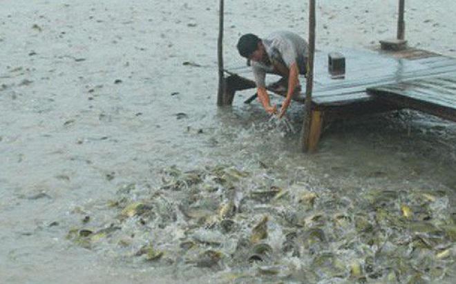 Cô gái chê đối tượng xem mặt không nuôi nổi mình, câu trả lời của anh nuôi cá khiến cô xấu hổ - Ảnh 1.