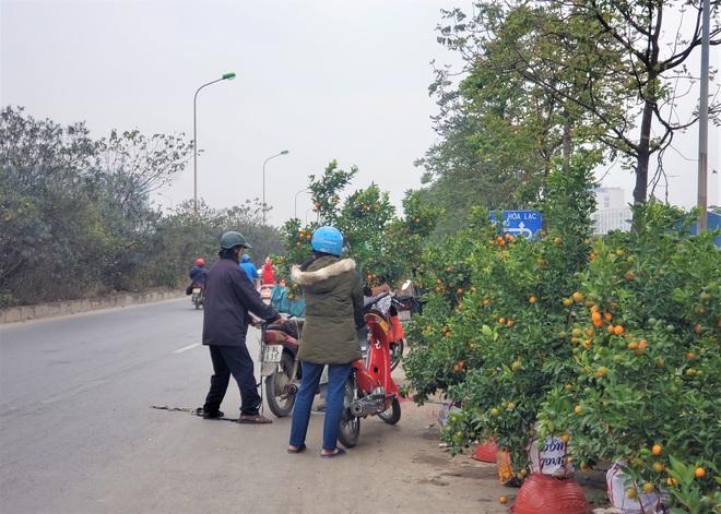 Ngày 29 Tết: Quất cảnh bán tràn đường, lan hồ điệp phá giá giảm sốc 50% đẩy hàng tồn - Ảnh 4.