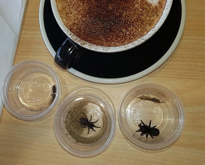 Hậu cháy rừng Úc: Sự trỗi dậy của nhện độc nhất thế giới, khiến nạn nhân chết ngạt trên cạn - Ảnh 2.