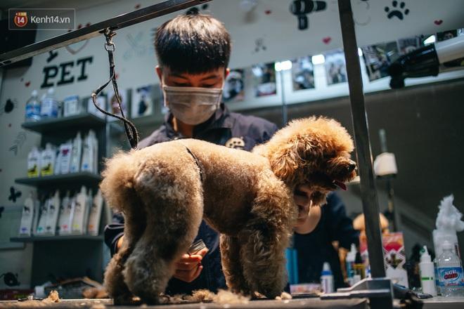 Sướng như boss dịp Tết: Sen đưa đi làm đẹp xong gửi vào khách sạn chó mèo siêu 'sang chảnh' giá tiền triệu - ảnh 16