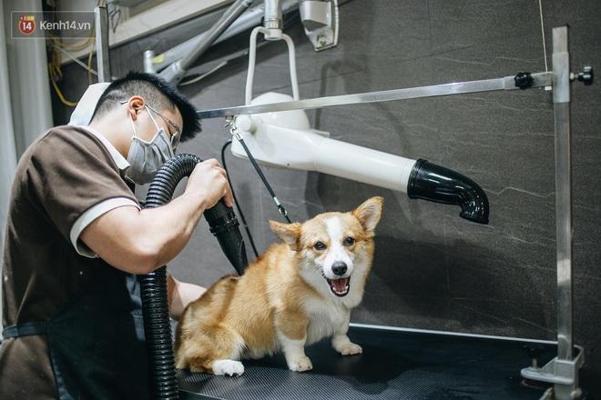 Sướng như boss dịp Tết: Sen đưa đi làm đẹp xong gửi vào khách sạn chó mèo siêu 'sang chảnh' giá tiền triệu - ảnh 17