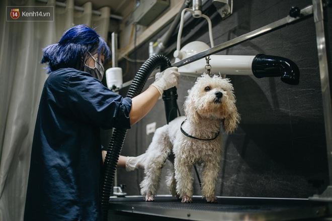 Sướng như boss dịp Tết: Sen đưa đi làm đẹp xong gửi vào khách sạn chó mèo siêu 'sang chảnh' giá tiền triệu - ảnh 18