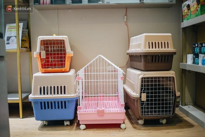 Sướng như boss dịp Tết: Sen đưa đi làm đẹp xong gửi vào khách sạn chó mèo siêu 'sang chảnh' giá tiền triệu - ảnh 8