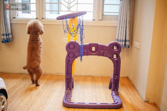 Sướng như boss dịp Tết: Sen đưa đi làm đẹp xong gửi vào khách sạn chó mèo siêu 'sang chảnh' giá tiền triệu - ảnh 11