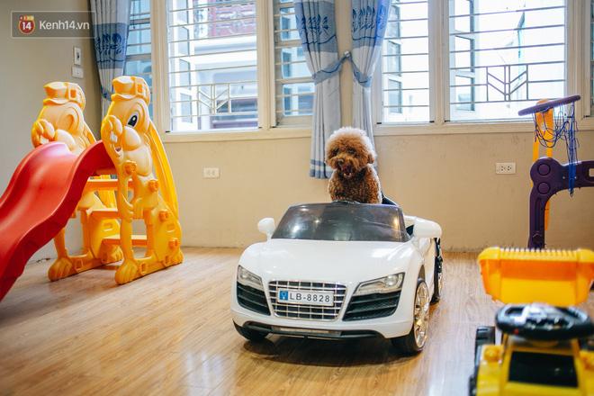 Sướng như boss dịp Tết: Sen đưa đi làm đẹp xong gửi vào khách sạn chó mèo siêu 'sang chảnh' giá tiền triệu - ảnh 12