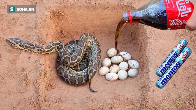 Thấy tổ trứng và 1 cái hố, cậu bé đổ coca và kẹo mentos vào thì thấy sinh vật đáng sợ - Ảnh 3.