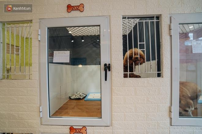 Sướng như boss dịp Tết: Sen đưa đi làm đẹp xong gửi vào khách sạn chó mèo siêu 'sang chảnh' giá tiền triệu - ảnh 2
