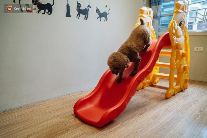 Sướng như boss dịp Tết: Sen đưa đi làm đẹp xong gửi vào khách sạn chó mèo siêu 'sang chảnh' giá tiền triệu - ảnh 13