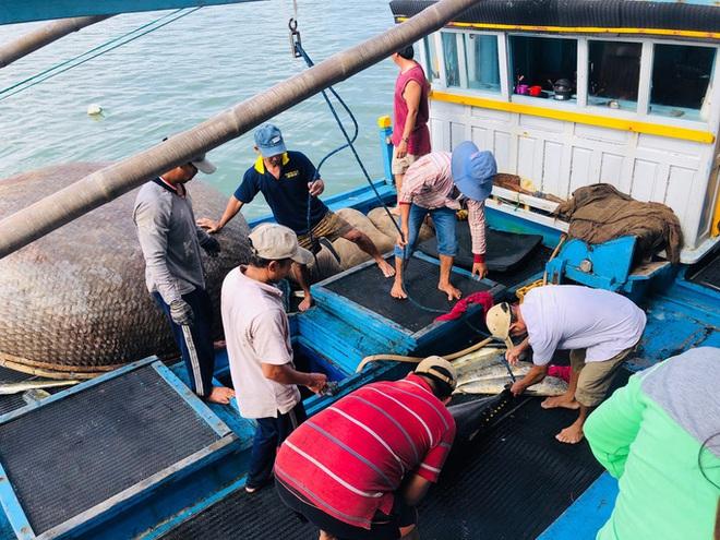 Ngư dân Phú Yên mỏi tay khiêng cá ngừ đại dương  - Ảnh 1.