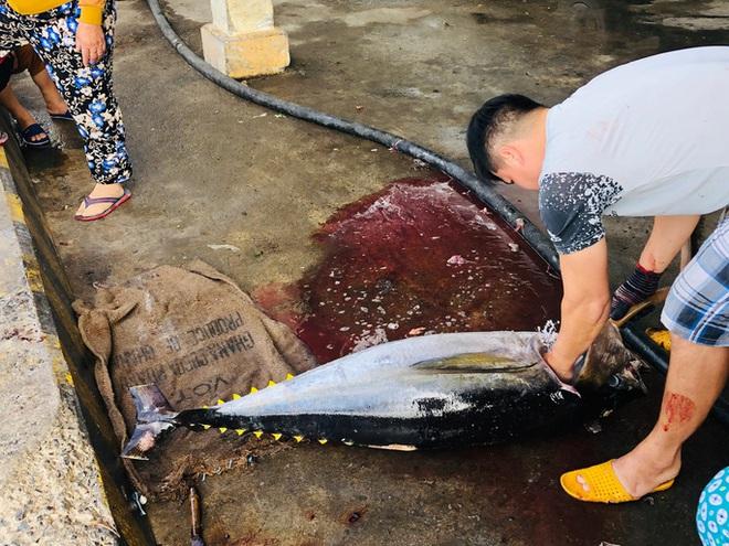 Ngư dân Phú Yên mỏi tay khiêng cá ngừ đại dương  - Ảnh 4.