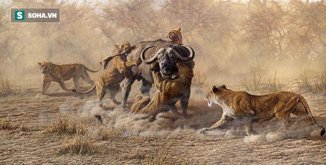 Cất công mai phục bên bờ sông, sư tử cái mất mồi ngon vì sư tử đực... quá nhát gan - Ảnh 1.