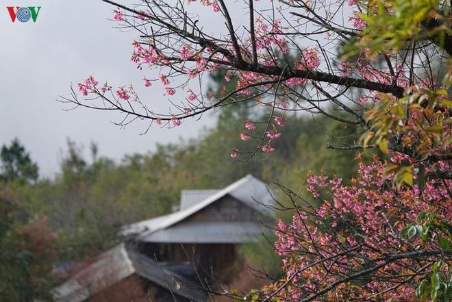 Ảnh: Hoa đào bừng sáng trời đông Mù Cang Chải - Ảnh 13.