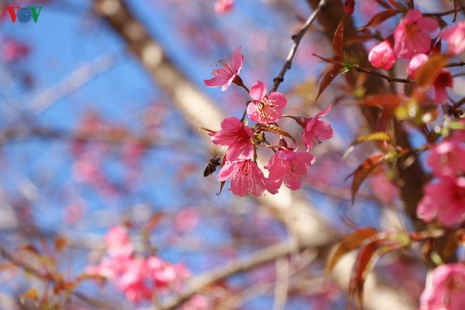 Ảnh: Hoa đào bừng sáng trời đông Mù Cang Chải - Ảnh 4.