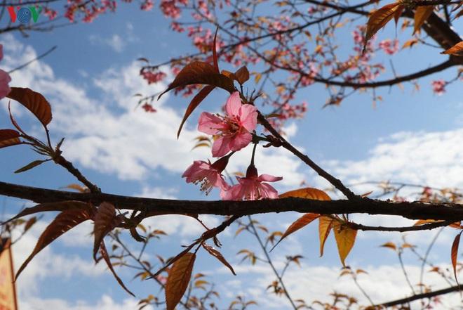 Ảnh: Hoa đào bừng sáng trời đông Mù Cang Chải - Ảnh 5.