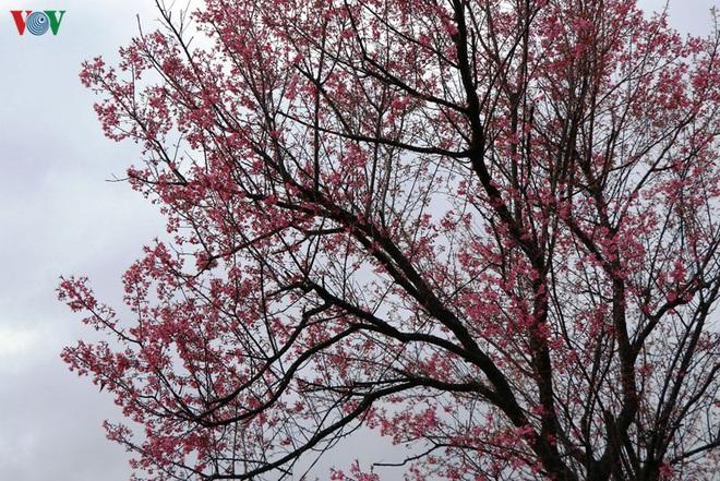 Ảnh: Hoa đào bừng sáng trời đông Mù Cang Chải - Ảnh 6.