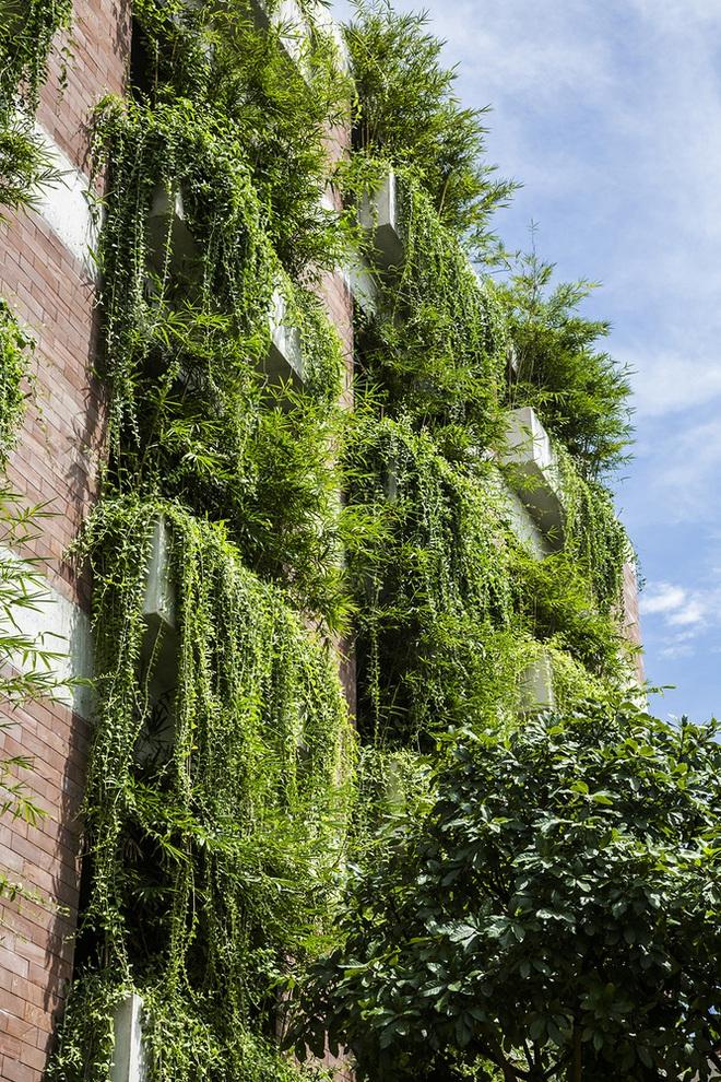 Khách sạn cây xanh độc đáo bậc nhất Việt Nam - Ảnh 12.