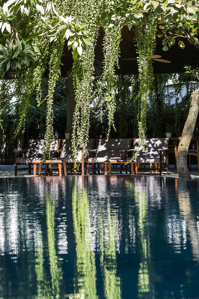Khách sạn cây xanh độc đáo bậc nhất Việt Nam - Ảnh 10.