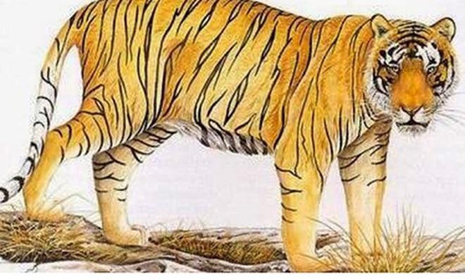 """Những con vật hiện thân cho mỗi cung hoàng đạo: Bạch Dương được ví như """"chúa sơn lâm"""" - Ảnh 1."""