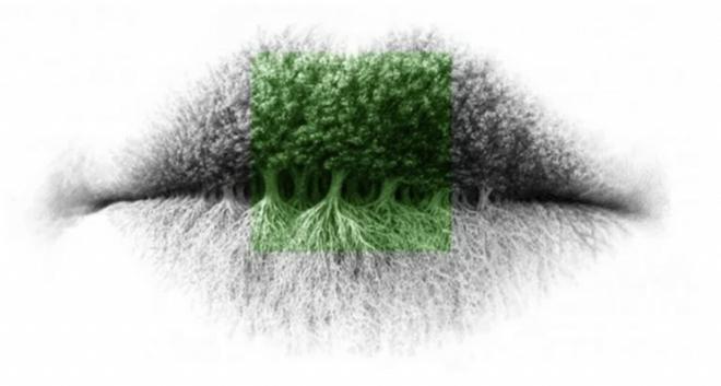 Bạn nhìn thấy hình ảnh gì trước tiên? Người tinh tế sẽ thấy rừng cây - Ảnh 2.