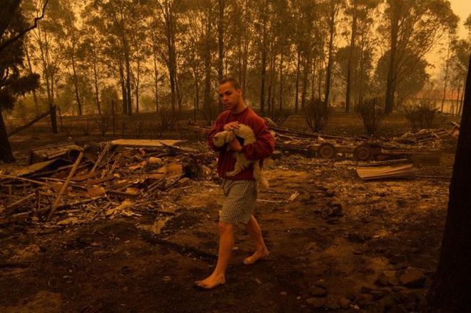 Các loài vật 'bị nấu chín tới chết' trong thảm họa cháy rừng ở Australia - ảnh 6