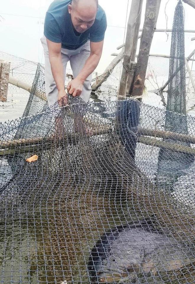 Đam mê với cá mú khổng lồ - Ảnh 1.