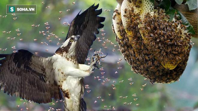 Thấy tổ ong bắp cày khổng lồ trên ngọn cao, diều hâu đậu xuống và làm điều bất ngờ - Ảnh 1.